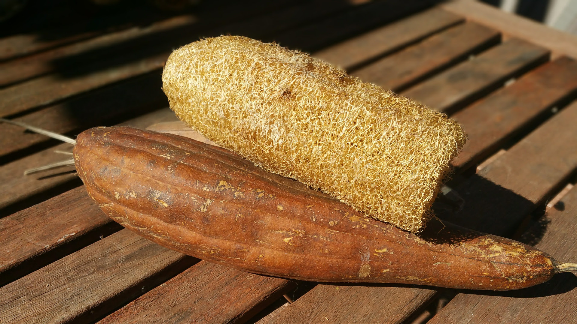 Grow your own all natural luffa sponges