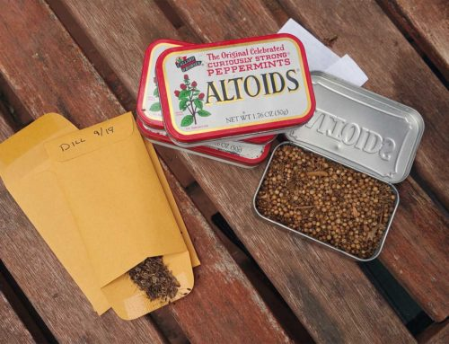 How to Save Seeds the Lazy Way