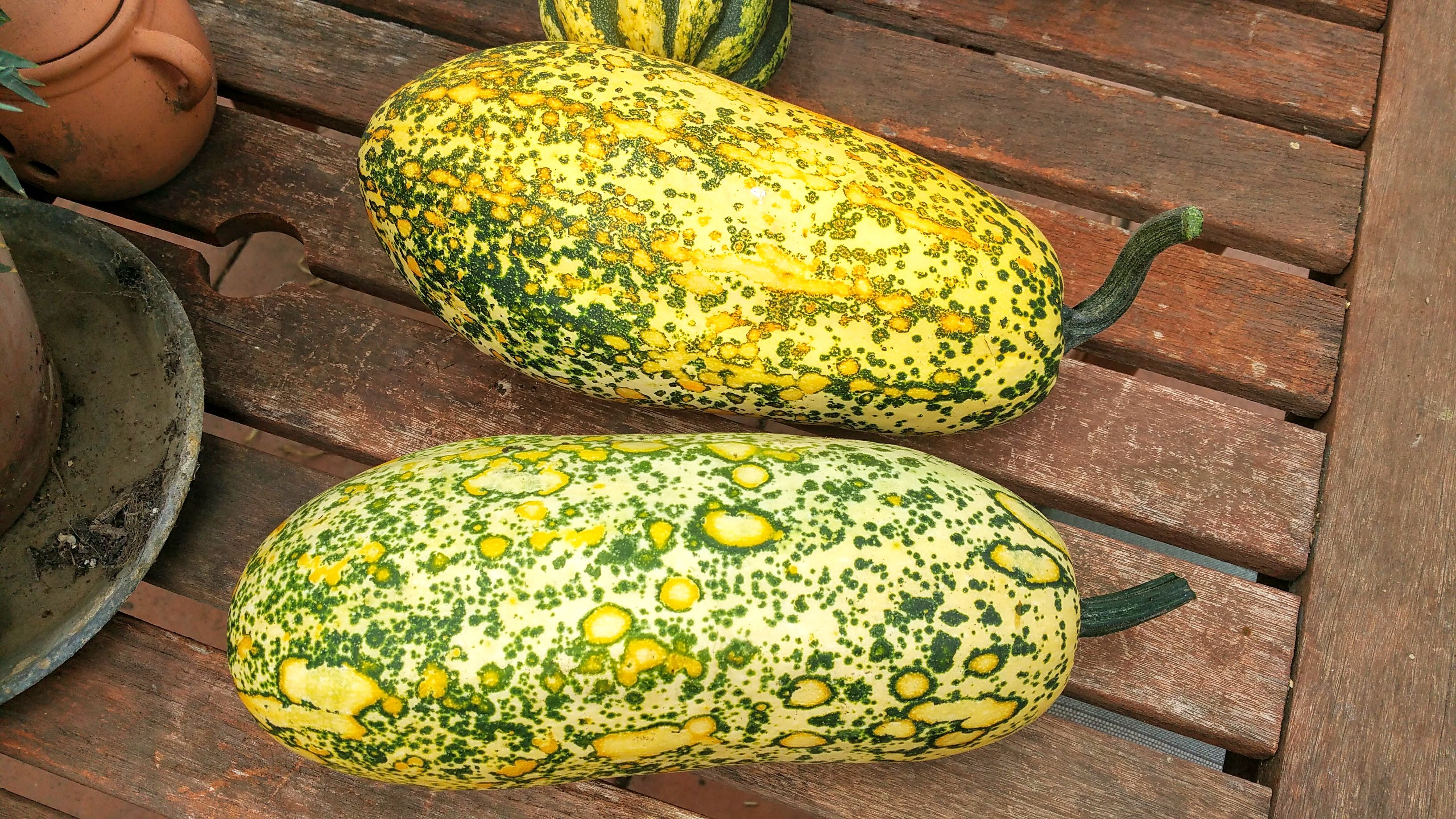 photo of speckled winter squash