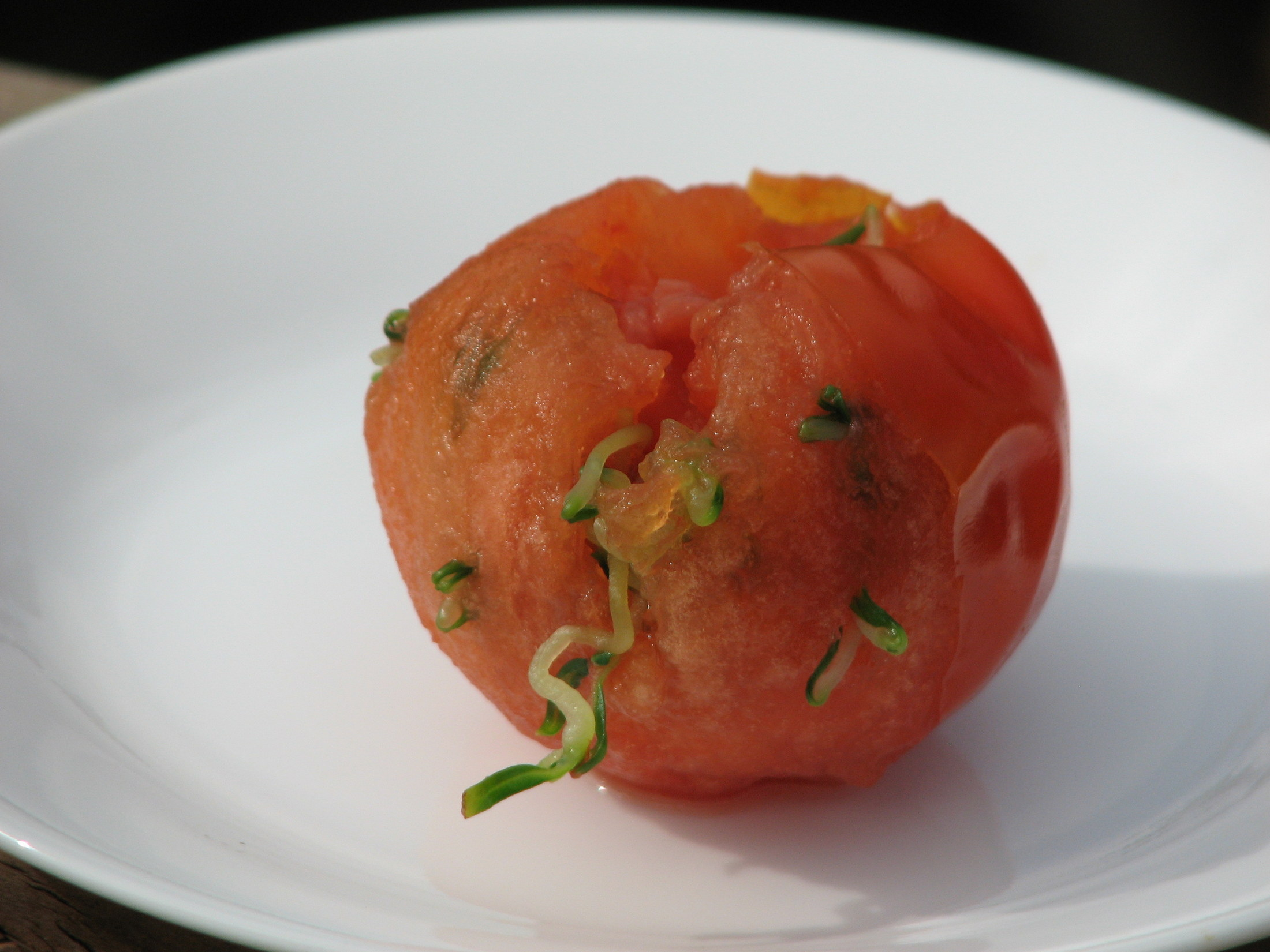 Photo of Tomato with seedlings