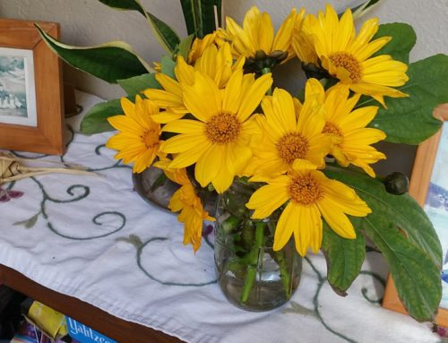Tithonia Sunshine Bouquet